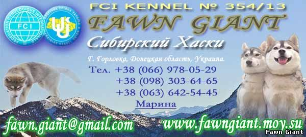 FCI Kennel Fawn Giant